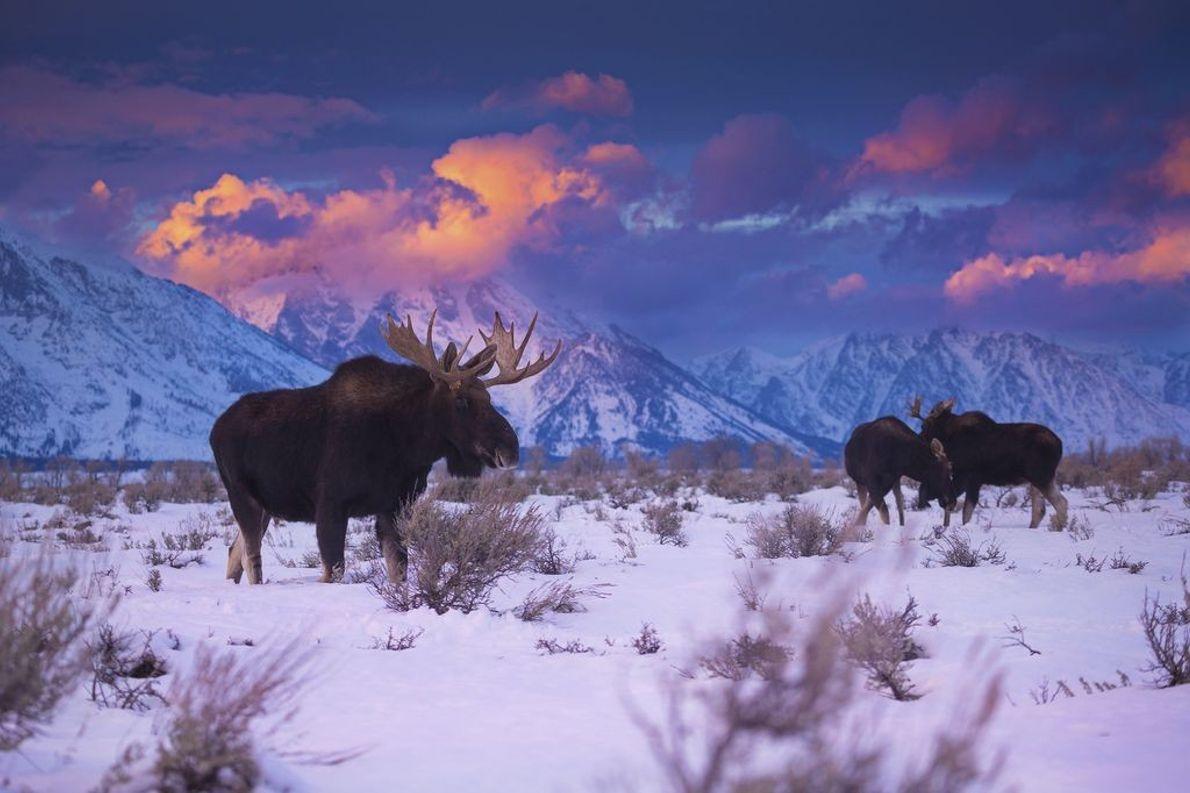 Grand-Teton-Nationalparks