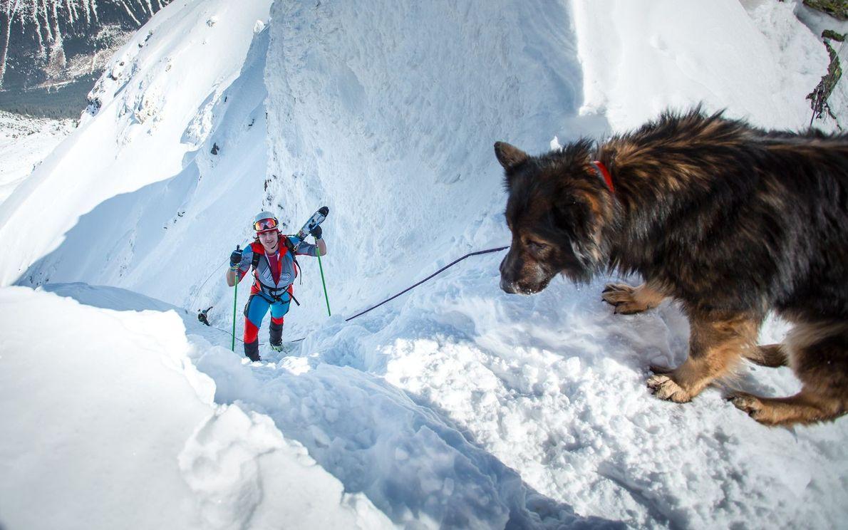 Hund und Athlet im Schnee