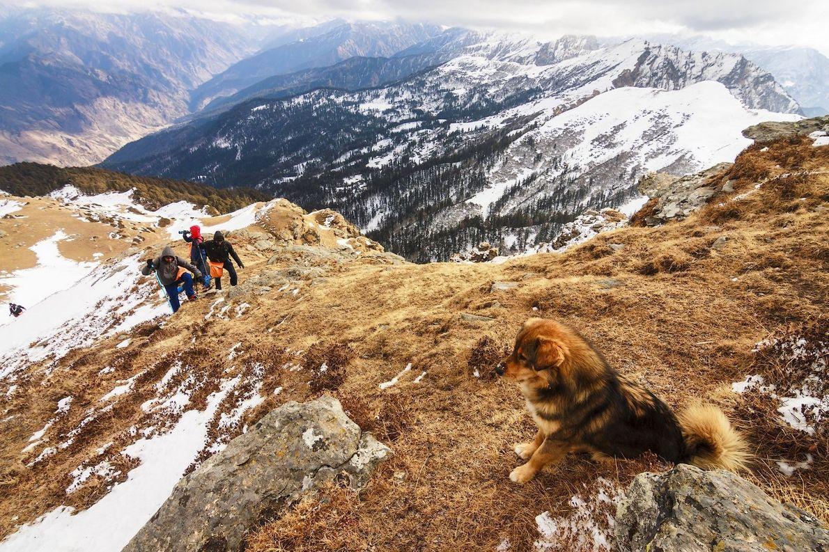 Hund und 2 Besitzer beim Wandern
