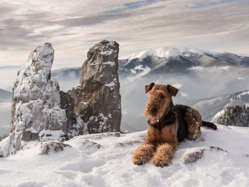 Galerie: Wandern mit Hund: 31 Aufnahmen abenteuerlustiger Vierbeiner