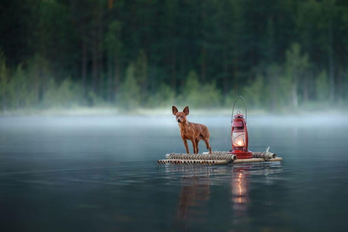 Hund auf Floß