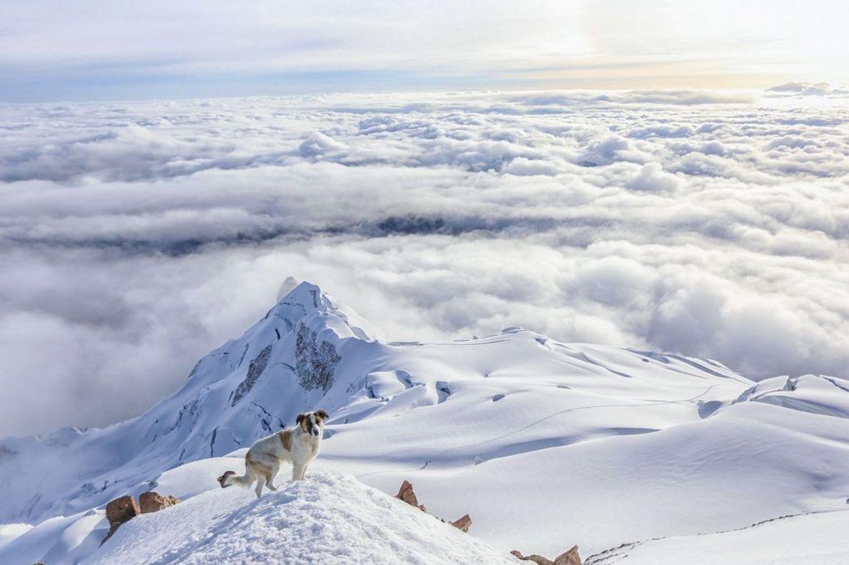 Hund auf dem Gipfel des Huayna Potosí
