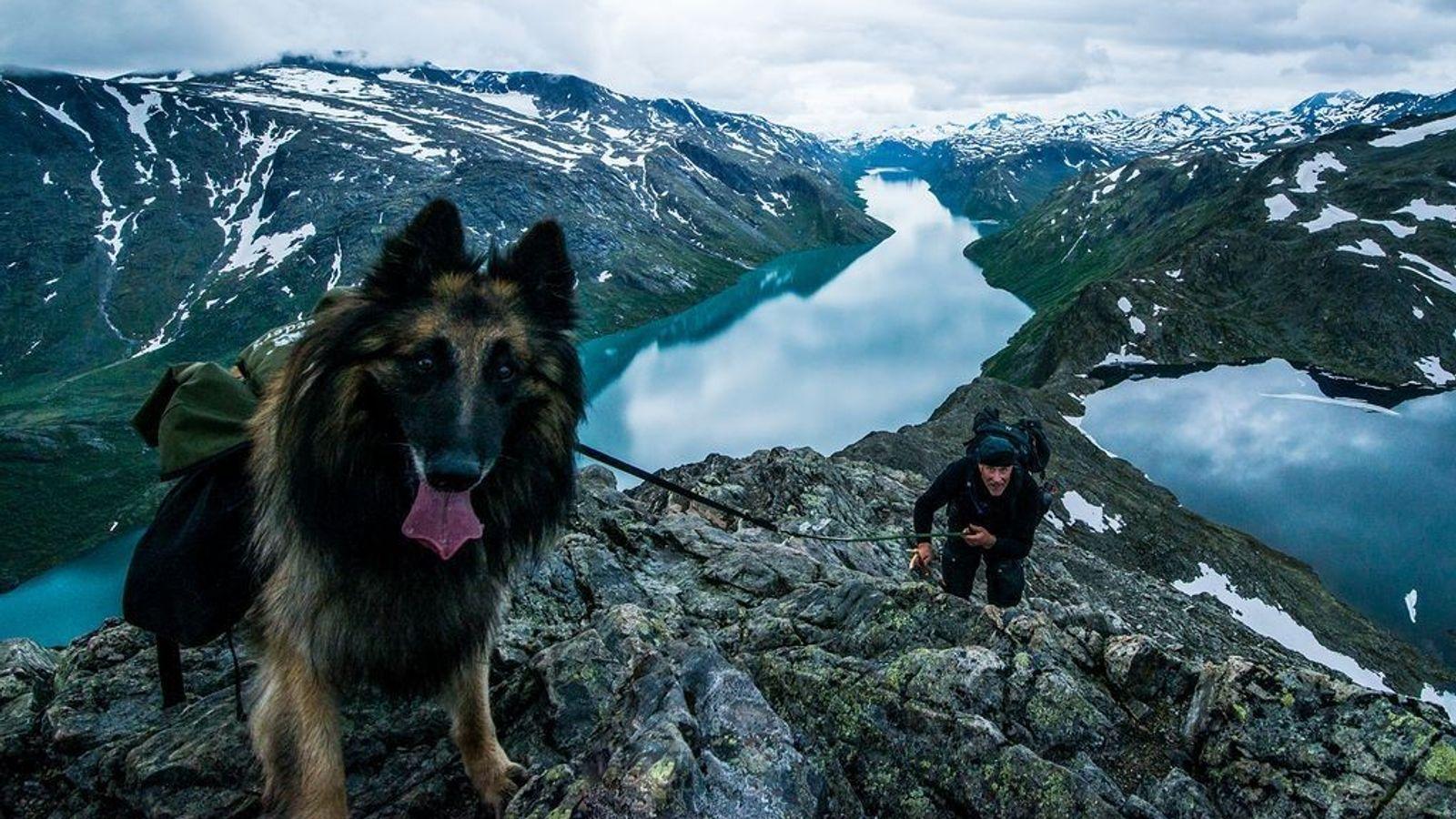 Hund und Wanderer