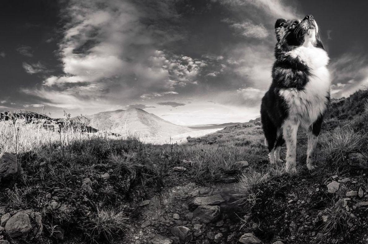 Ein Hund genießt die letzten Sonnenstrahlen des Sommers.