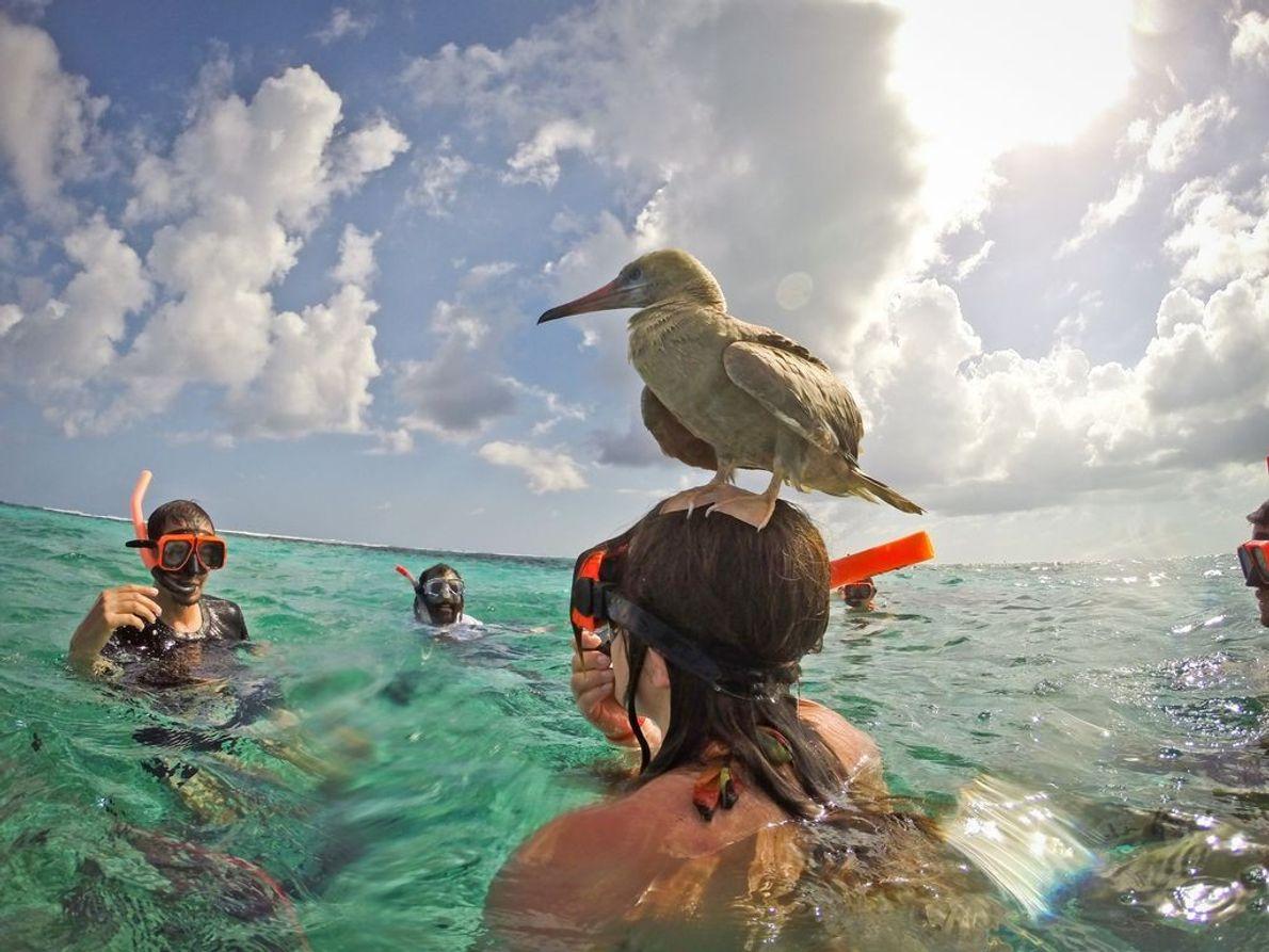 Ein Vogel hat sich einen ungewöhnlichen Landeplatz ausgesucht.