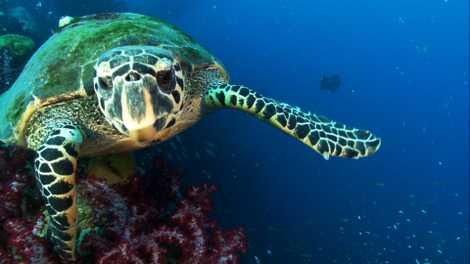 Leuchtende Meeresschildkröte entdeckt