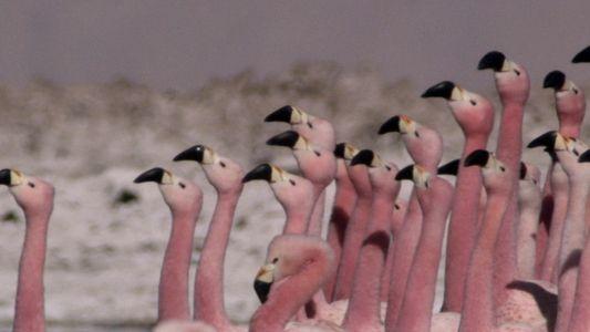 Die Versammlung der Flamingos