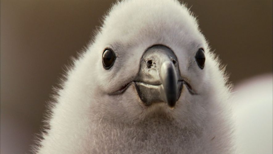 Die Liebe des Albatros