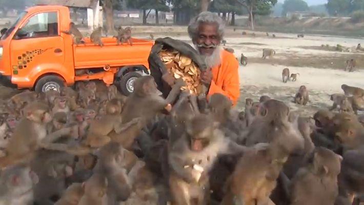 Affen stürzen sich auf Mann, der sie füttern will