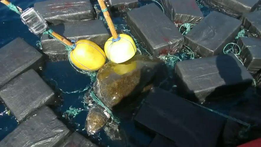 Schildkrötenrettung mit Kokainfund