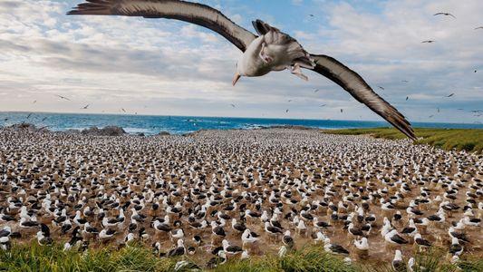 """""""Ich liebe die unzähligen Albatrosse"""""""