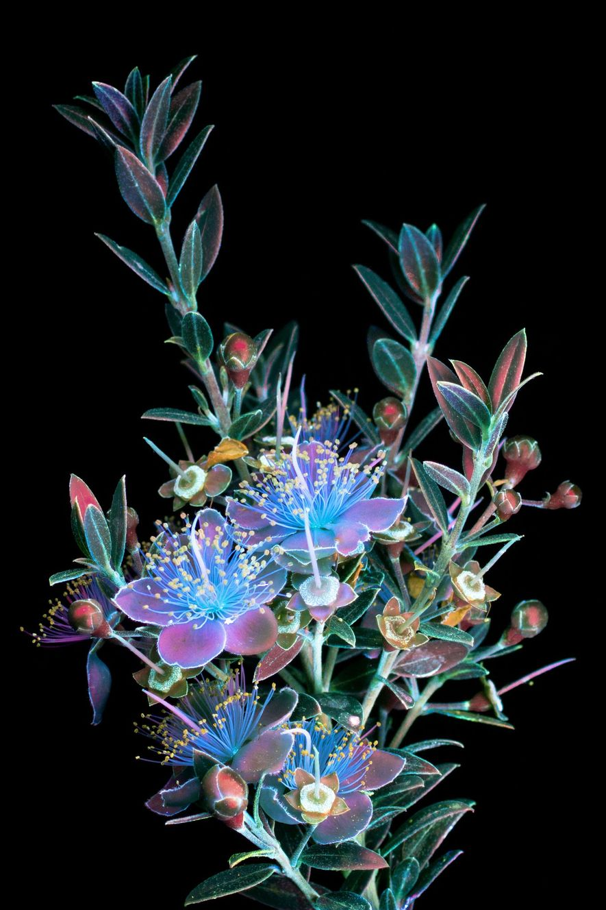 Ein Blumenstrauß