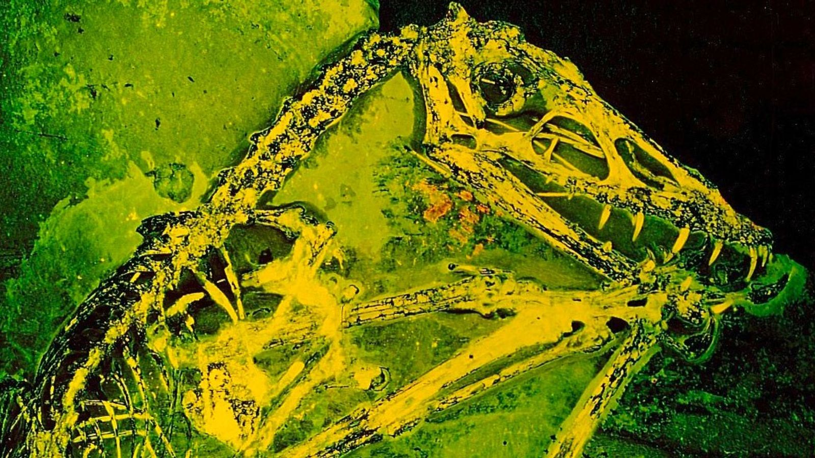 Flugsaurier-Fossil