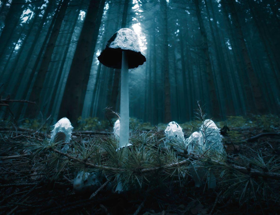 Pilze im Wald