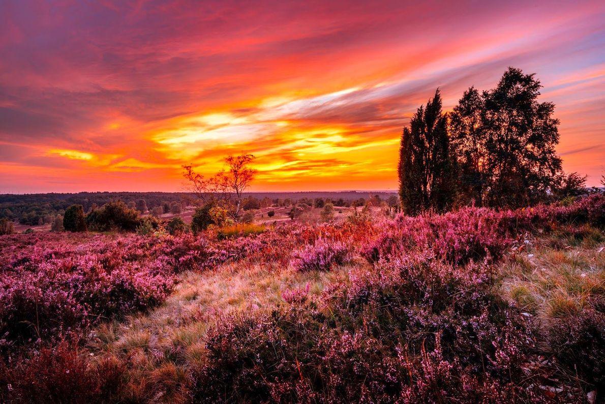 Lüneburger Heide im Abendrot