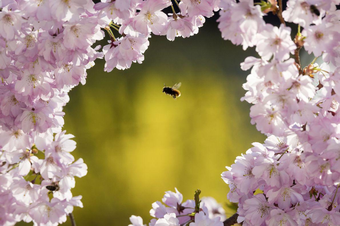 Fotowettbewerb, 5. Platz: Von Blüten und Bienen