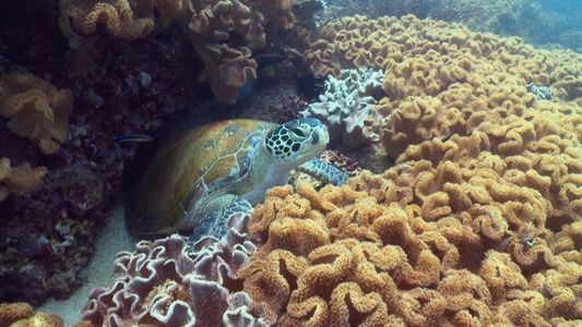 Am 11. Juni 1770 entdeckte Captain James Cook das Great Barrier Reef in Australien