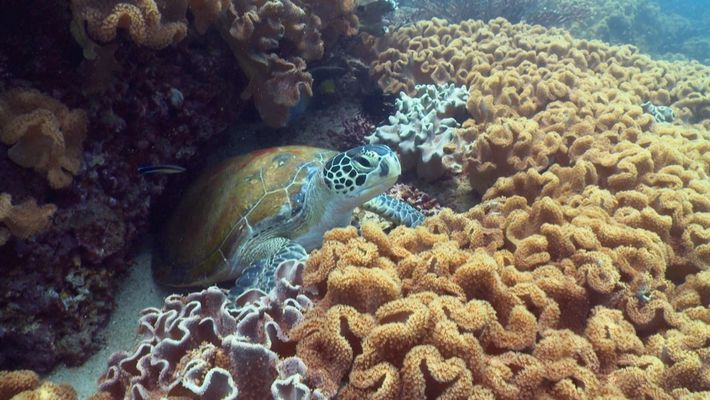 Am 11. Juni 1770 entdeckte Captain James Cook das Great Barrier Reef in Australien