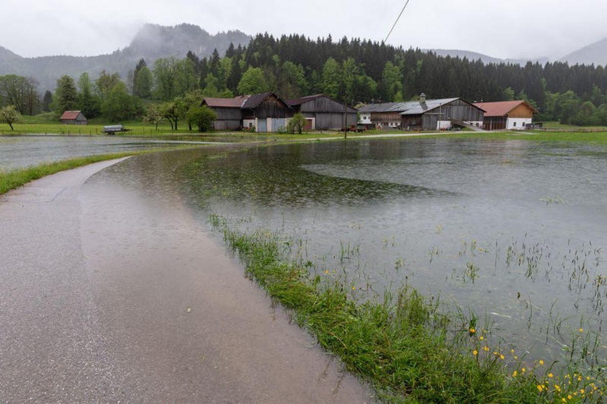 Überflutete Wiesen