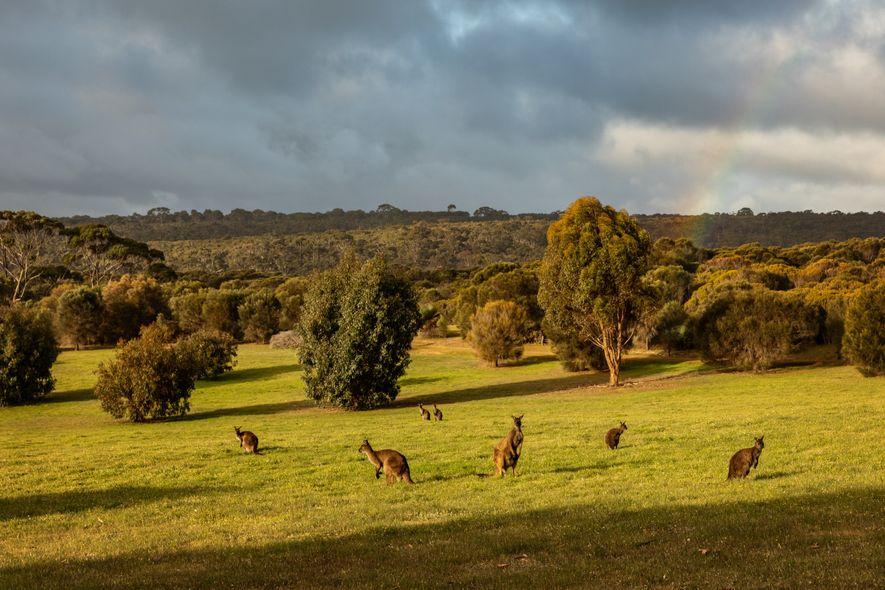 Südaustralien: Kangaroo Island, ein absolutes Paradies für die Tierbeobachtung