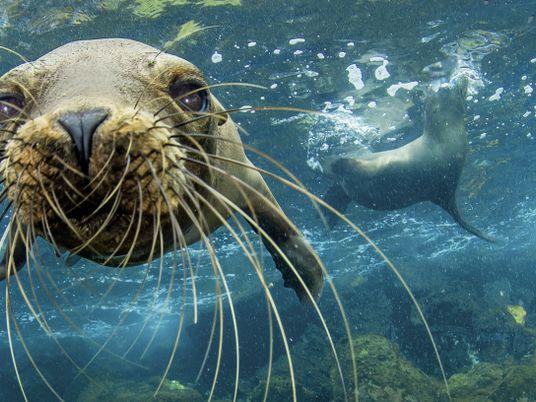 Unter Wasser liegt der wahre Schatz von Galápagos