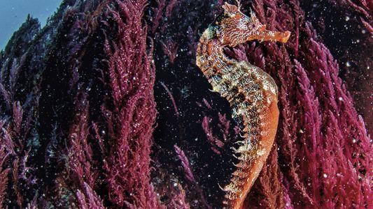 Galerie: Unter Wasser liegt der wahre Schatz von Galápagos