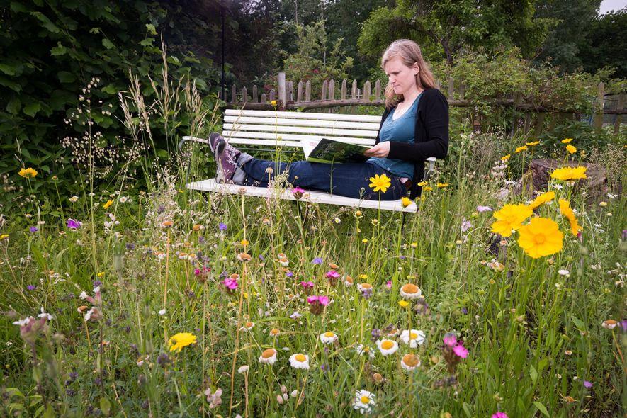 Naturnaher Garten: Blühende Wildblumen ziehen Schmetterlinge magisch an.