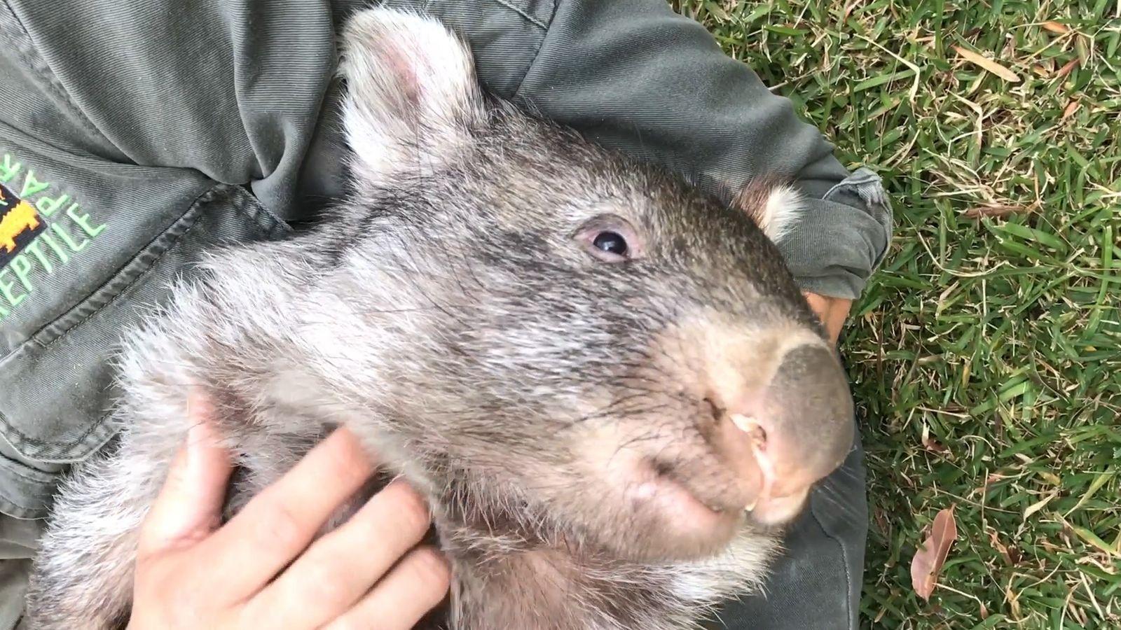 George das Wombat: Ein neues Leben in der Wildnis