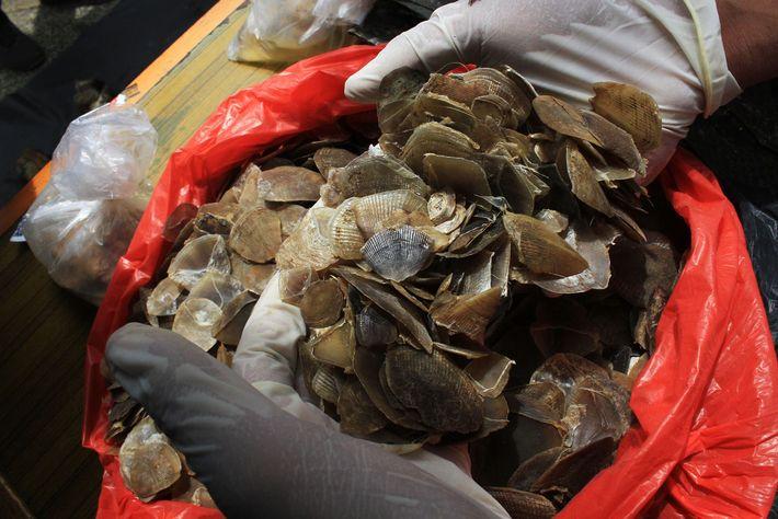 Illegale Lieferung von Schuppentierschuppen