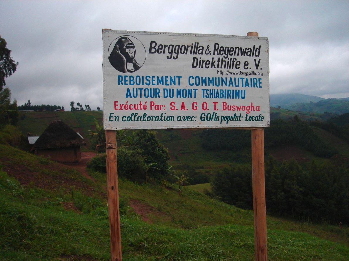 Der Verein unterstützt auch Aufforstungsflächen, wie hier am Mount Tshiaberimu im Osten der Demokratischen Republik Kongo.