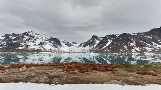 Die Basis Bluie East Two im Osten Grönlands wurde 1947 verlassen. Alles blieb zurück, inklusive 10.000 ...