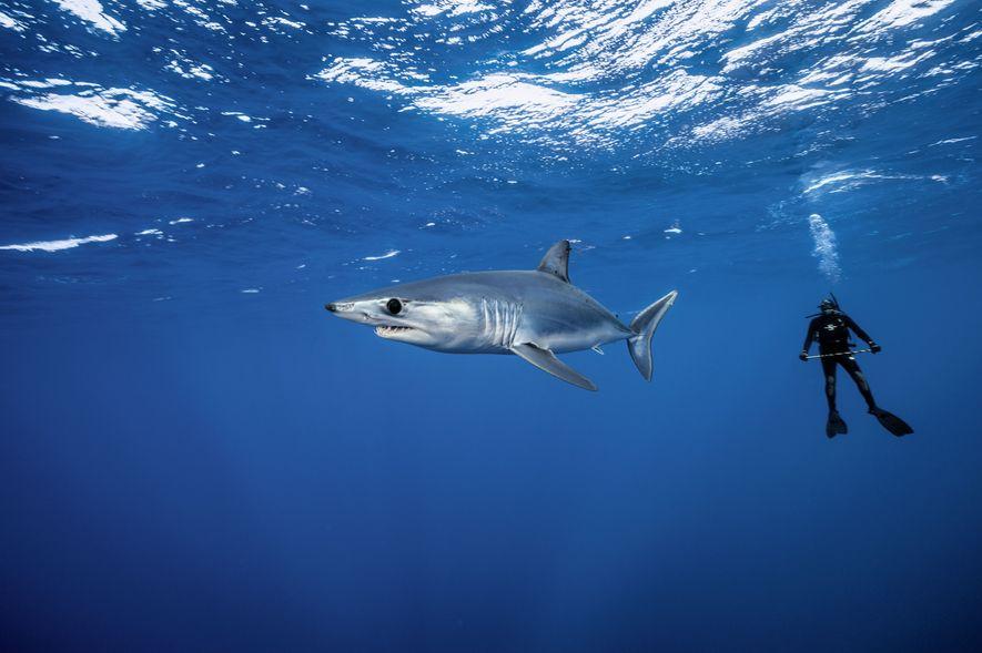 Galerie: Der schnellste Hai der Welt
