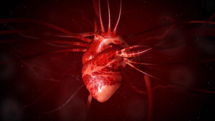 Wissen kompakt: Das Herz