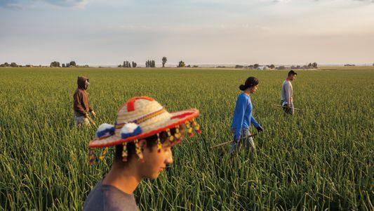 Galerie: Wie die Latinos die USA verändern