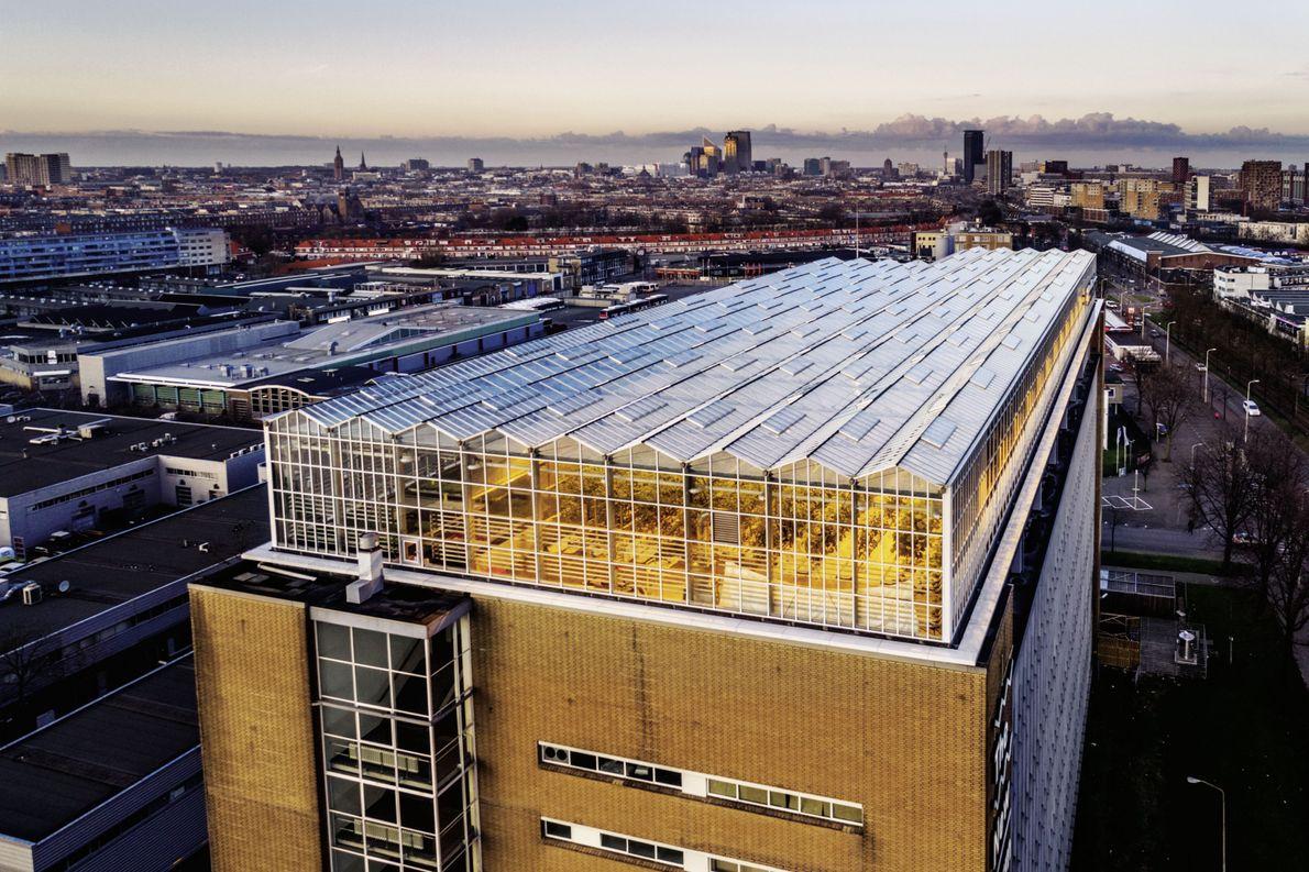 Farm-Dach in Den Haag