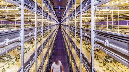 Galerie: Wie Holland mit Hightech die Landwirtschaft revolutioniert