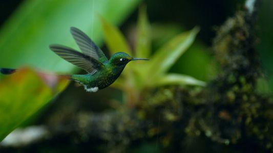 Kolibri kämpft mit dem Wolkenbruch