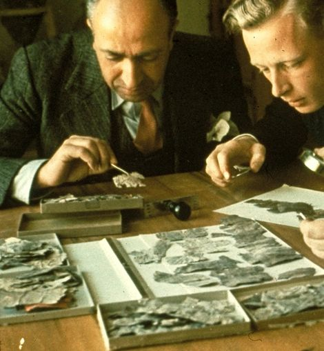 Claus-Hunno Hunzinger (rechts) und Joseph Saad, der damalige Kurator des Palestine Archeological Museum (PAM, heute Rockefeller ...