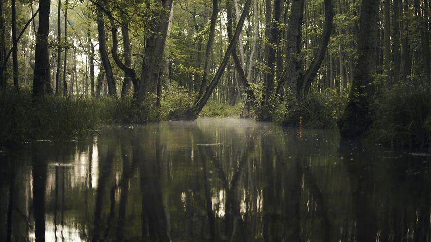 Küstrinchen – der kleine Dschungel Ostdeutschlands