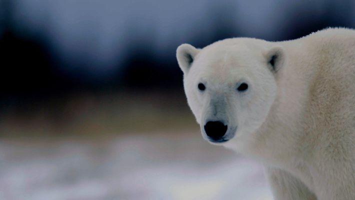 International Polar Bear Day_DE