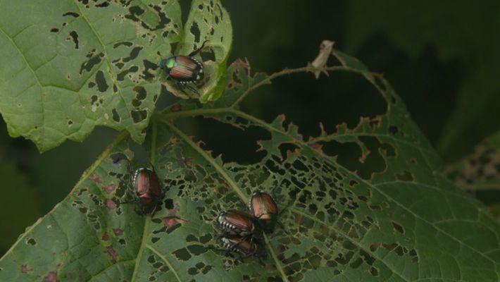 Wissen kompakt: Invasive Arten