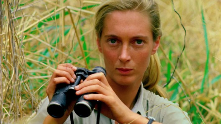 Helden des Artenschutzes: Jane Goodall