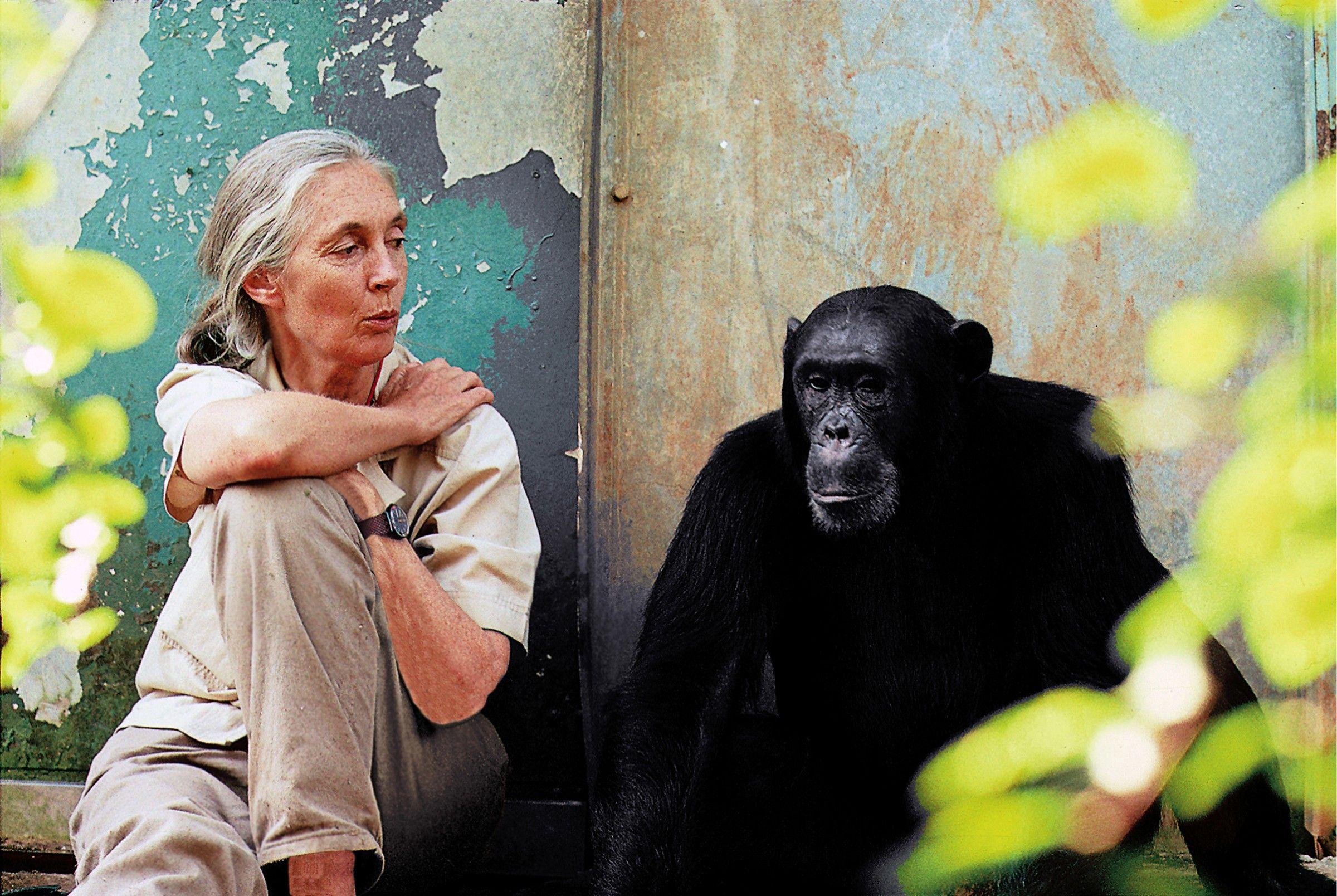 Forscherlegende Jane Goodall: Jeder kann die Welt verändern | National Geographic