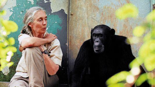 Forscherlegende Jane Goodall: Jeder kann die Welt verändern