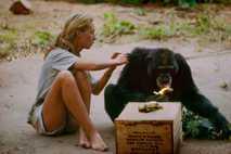 Janes Goodalls Feldforschungen über die Schimpansen in Tansania haben die Wissenschaft revolutioniert.