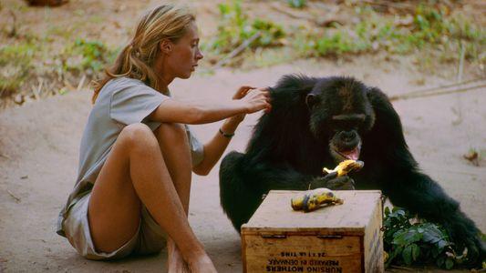 Bisher unveröffentlichtes Filmmaterial aus dem Leben von Jane Goodall