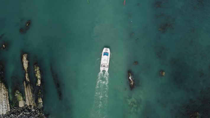 Breakout: Kaikōuras Delfine