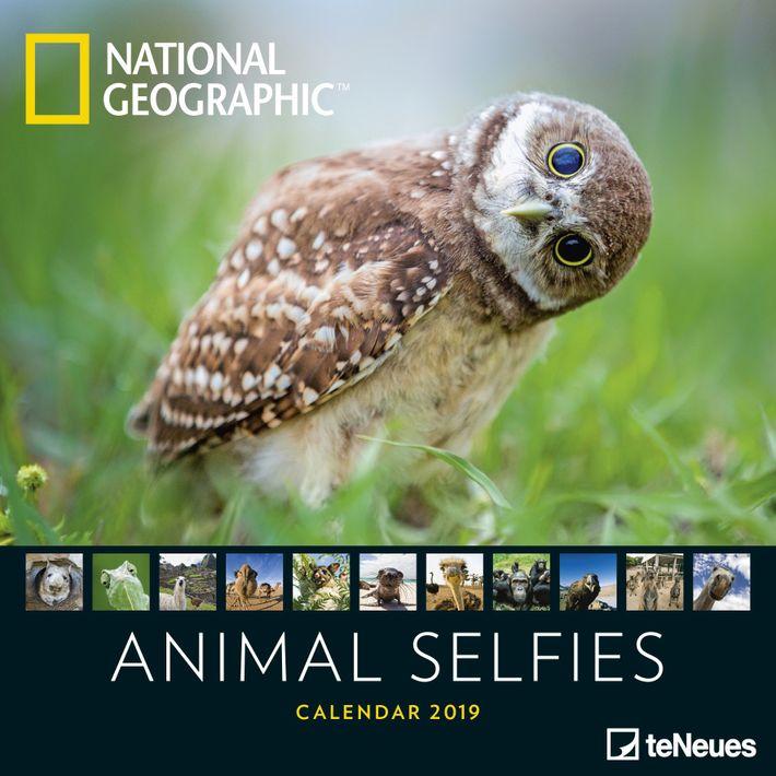 •National Geographic Broschürenkalender •Format von 30 x 30 cm, geöffnet 30 x 60 cm •6-sprachiges Kalendarium •Mondphasen •Lackiertes Deckblatt Der Animal ...