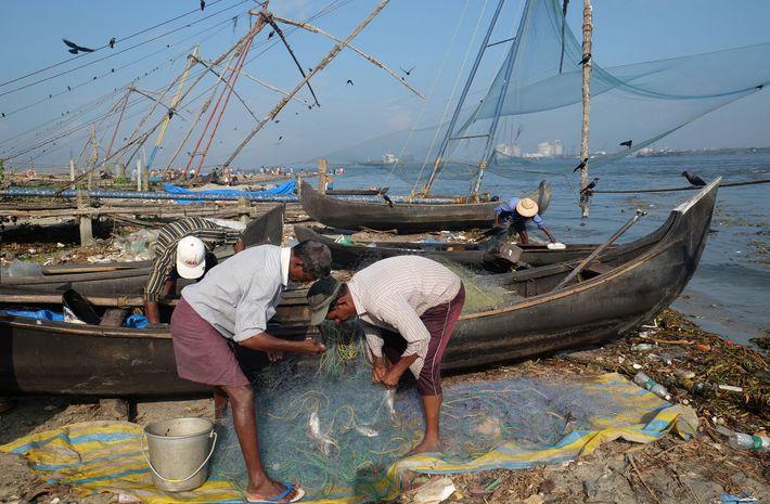 Fischer in Kochi sortieren ihren Fang.