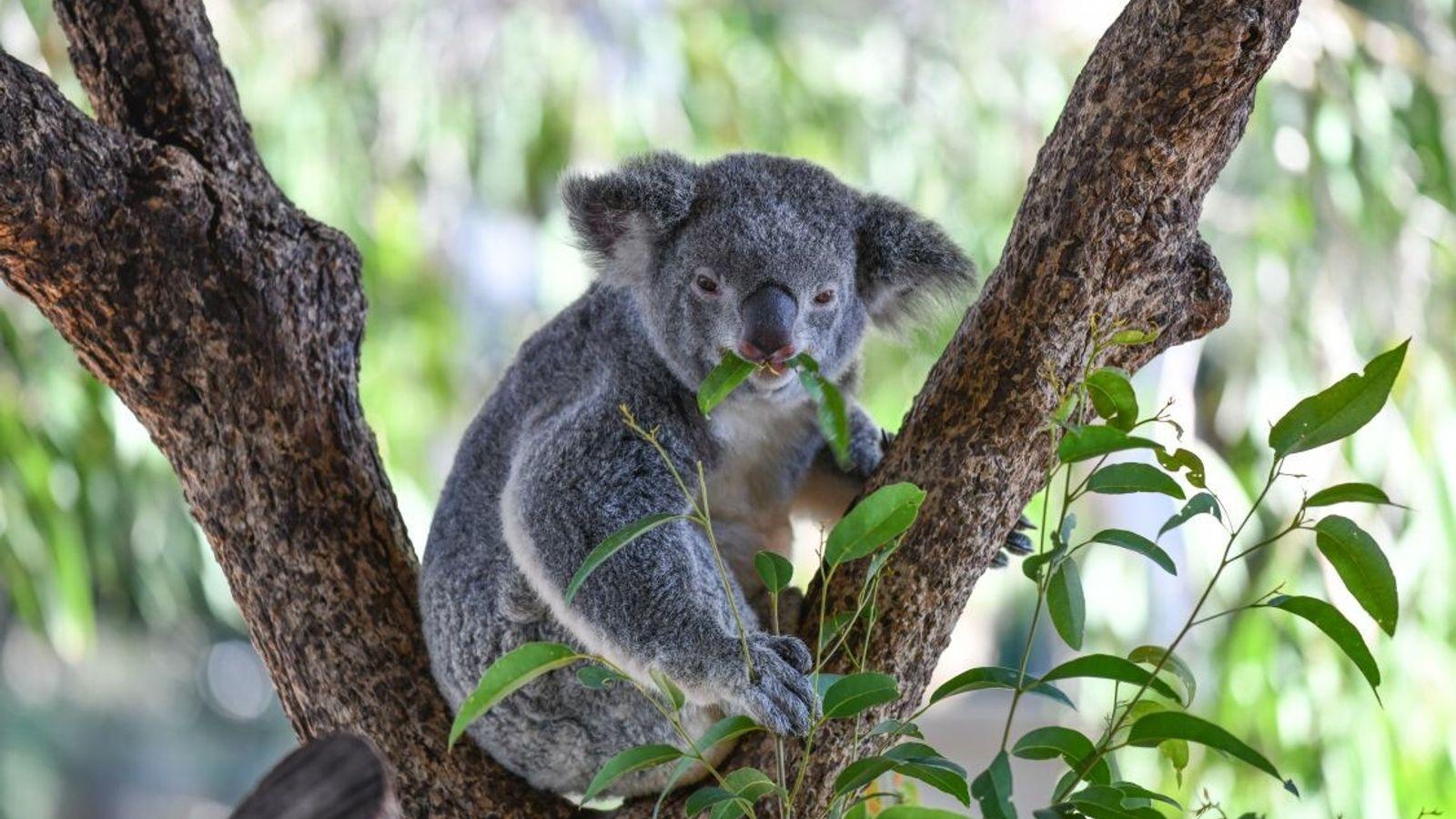 VERLIERER | Australische Tiere: Nach Angaben des WWF waren fast drei Milliarden Wirbeltiere von den verheerenden ...